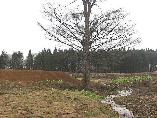 高屋敷館遺跡