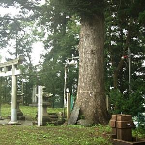 トピコの木