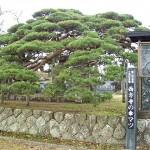 西方寺笠松