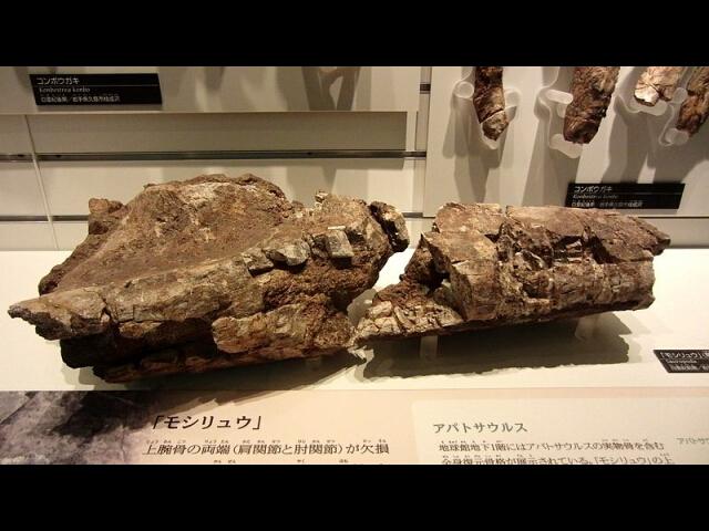 茂師龍化石発見地