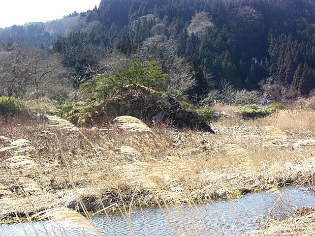 美豆の小島