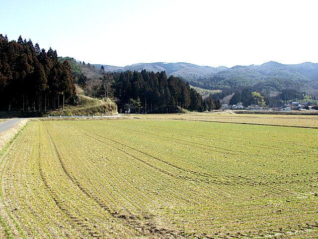 真野の萱原