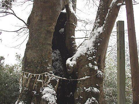 身隠しの木