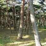 余景の松原