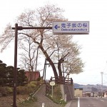 鬼子坂の桜