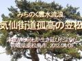 みちのく雲水流浪、気仙街道の笠松、津波から何とか生き延びたようだ、宮城県東松島市、2012/04/09